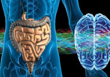 Epilessia: il ruolo attivo svolto dal microbiota intestinale