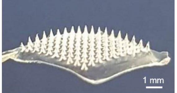Covid-19: cerotto con microaghi per vaccinare